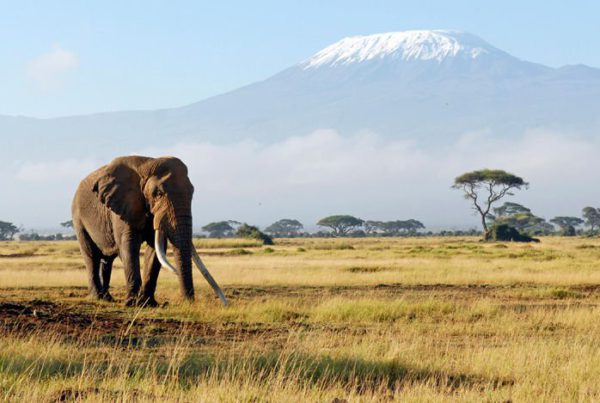 kilimandjaro-le-toit-de-lafrique